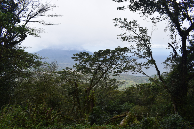 View of Concepción from Maderas through trees
